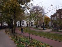Ramas contra el cielo, sobre tranvía-pistas, en la ciudad de Amsterdam imagen de archivo libre de regalías