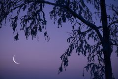 Ramas crecientes de la luna y de árbol Imágenes de archivo libres de regalías