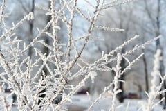 Ramas cubiertas con el árbol, el hielo y la nieve de la escarcha fotografía de archivo libre de regalías