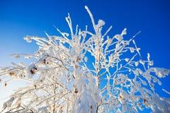 Ramas cubiertas con escarcha en fondo del cielo azul Imagenes de archivo