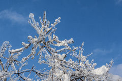 Ramas cubiertas con hielo en luz del sol Fotos de archivo