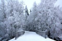 Ramas cubiertas con invierno blanco hermoso de la escarcha Fotografía de archivo libre de regalías