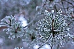 Ramas cubiertas con invierno blanco hermoso de la escarcha Imagen de archivo