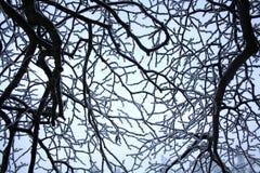 Ramas cubiertas con invierno blanco hermoso de la escarcha Fotos de archivo libres de regalías