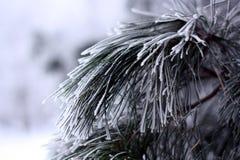 Ramas cubiertas con invierno blanco hermoso de la escarcha Foto de archivo libre de regalías