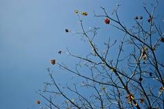 Ramas de árbol Fotografía de archivo libre de regalías