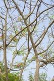 Ramas de árbol Imagen de archivo
