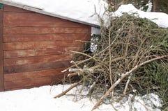 Ramas de árbol arregladas de pino Foto de archivo