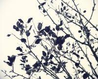 Ramas de árbol con el follaje caido-abajo en día del otoño Foto de archivo