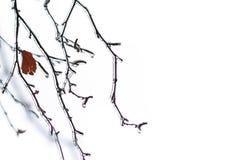 Ramas de árbol con hielo transparente brillante en un invierno Fotos de archivo