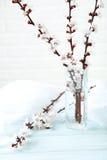 Ramas de árbol con las flores Imagenes de archivo