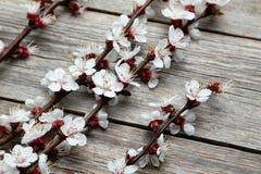 Ramas de árbol con las flores Foto de archivo