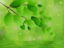Ramas de árbol con las hojas sobre el agua y las reflexiones Foto de archivo