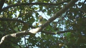 Ramas de árbol con los loros salvajes Loros de la cámara lenta que comen entre árboles almacen de metraje de vídeo