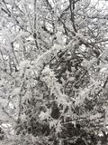 Ramas de árbol con nieve fotografía de archivo