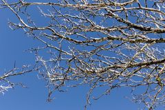 Ramas de árbol congeladas contra el fondo del cielo fotos de archivo