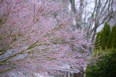 Ramas de árbol congeladas después de la lluvia sobrefundida imagen de archivo