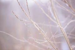 Ramas de árbol congeladas en el hielo Rama de árbol congelada en la rama del bosque del invierno cubierta con nieve Foto de archivo