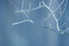 Ramas de árbol congeladas en el hielo Rama de árbol congelada en la rama del bosque del invierno cubierta con nieve Fotografía de archivo libre de regalías