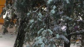 Ramas de árbol congeladas en las calles metrajes
