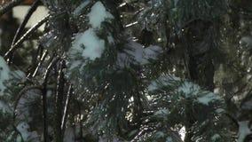Ramas de árbol congeladas en las calles almacen de metraje de vídeo