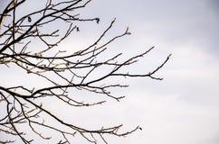 Ramas de árbol contra el cielo, Foto de archivo libre de regalías