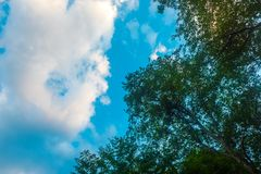 Ramas de árbol contra el cielo azul Foto de archivo libre de regalías