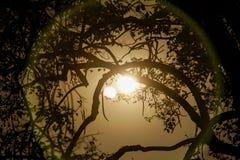 Ramas de árbol de abedul de la silueta Foto de archivo libre de regalías