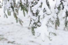 Ramas de árbol de abeto debajo de la nieve Imágenes de archivo libres de regalías