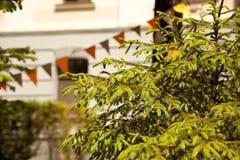 Ramas de árbol de abeto en un parque adornado con las banderas Fotos de archivo libres de regalías