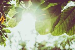 Ramas de árbol de la opinión de la altura Imagenes de archivo