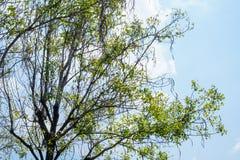 Ramas de árbol de la opinión de la altura Fotografía de archivo