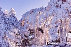 Ramas de árbol debajo de la nieve Fotos de archivo libres de regalías