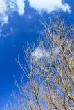 Ramas de árbol deshojadas contra el cielo azul Fotografía de archivo