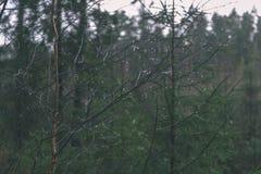 ramas de árbol desnudas de abedul en otoño contra fondo oscuro - VI Fotografía de archivo