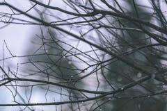 ramas de árbol desnudas de abedul en otoño contra fondo oscuro - VI Imágenes de archivo libres de regalías