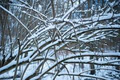 Ramas de árbol desnudas cubiertas en nieve Fotos de archivo