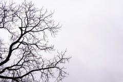 Ramas de árbol desnudas en el fondo blanco del cielo Imagen de archivo