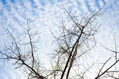 Ramas de árbol detalladas contra el cielo con blanco Fotos de archivo libres de regalías