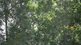Ramas de árbol en el país - ventoso almacen de video