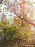 Ramas de árbol en el parque del otoño encendido por el sol poniente con fotografía de archivo