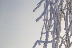Ramas de árbol en escarcha Imagenes de archivo