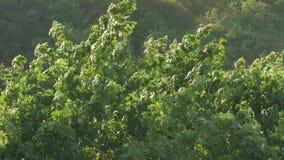 Ramas de árbol en fuerte viento almacen de metraje de vídeo