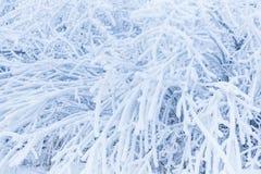 Ramas de árbol en la escarcha pesada texturizada Evaporación en concepto del invierno fotografía de archivo libre de regalías