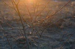 Ramas de árbol en la puesta del sol Imagen de archivo libre de regalías