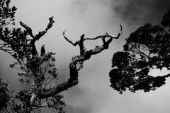 Ramas de árbol en nubes fotografía de archivo