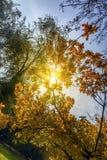 Ramas de árbol en otoño Imagen de archivo