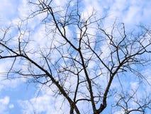 Ramas de árbol en silueta y Bluesky con las nubes Imágenes de archivo libres de regalías