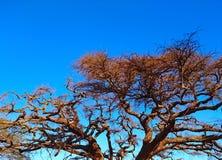 Ramas de árbol en un cielo azul claro para el fondo imagen de archivo libre de regalías