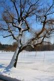 Ramas de árbol en un cielo azul durante invierno Imágenes de archivo libres de regalías
